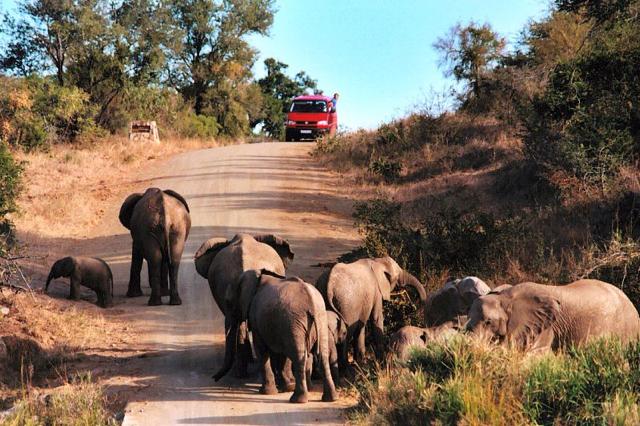 africa photo safari Kruger park20.jpeg