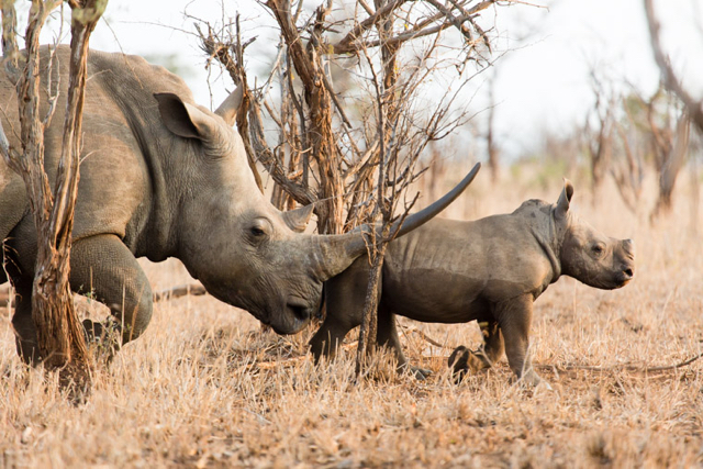 africa photo safari Kruger park19.jpeg