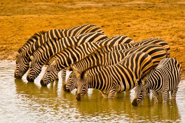 africa photo safari Kruger park18.jpeg