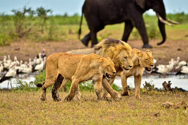 africa photo safari Kruger park16.jpeg