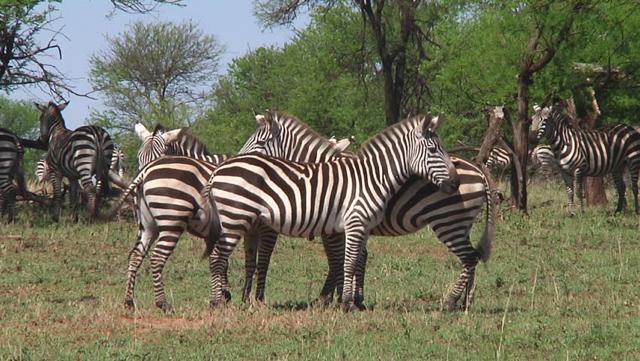 africa photo safari Kruger park15.jpeg