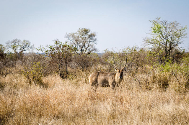 africa photo safari Kruger park11.jpeg