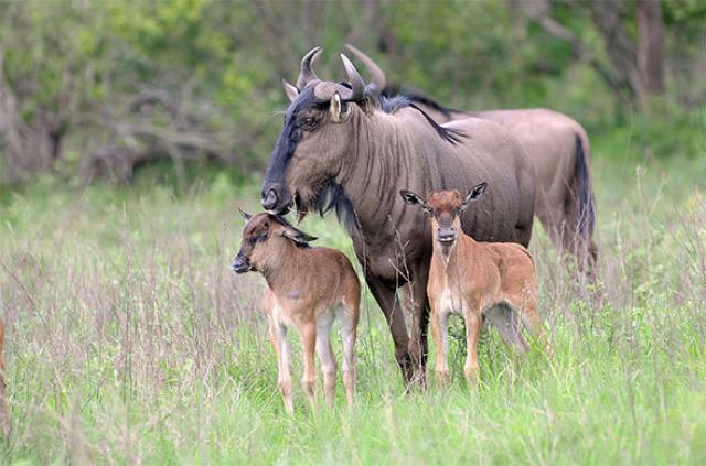 africa photo safari Kruger park9.jpeg