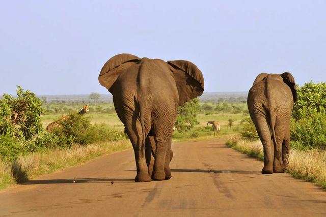 africa photo safari Kruger park4.jpeg