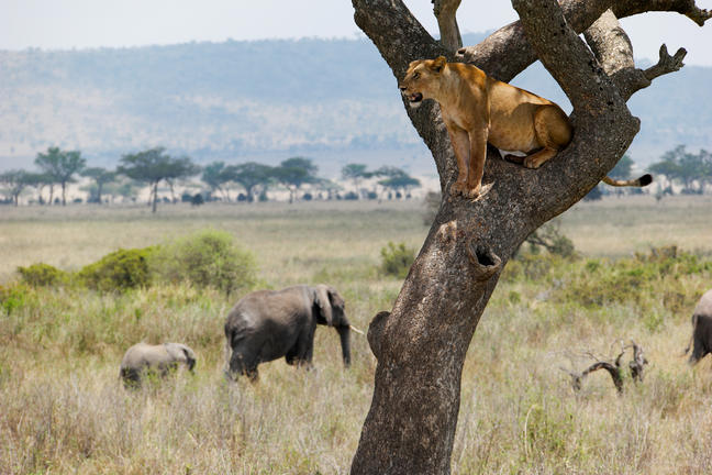 africa photo safari-tanzania117.jpg