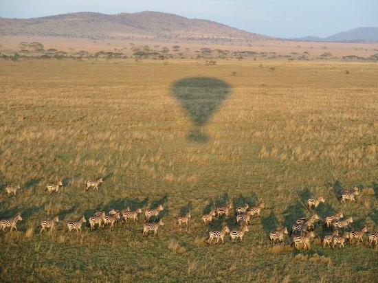 africa photo safari-tanzania106.jpg