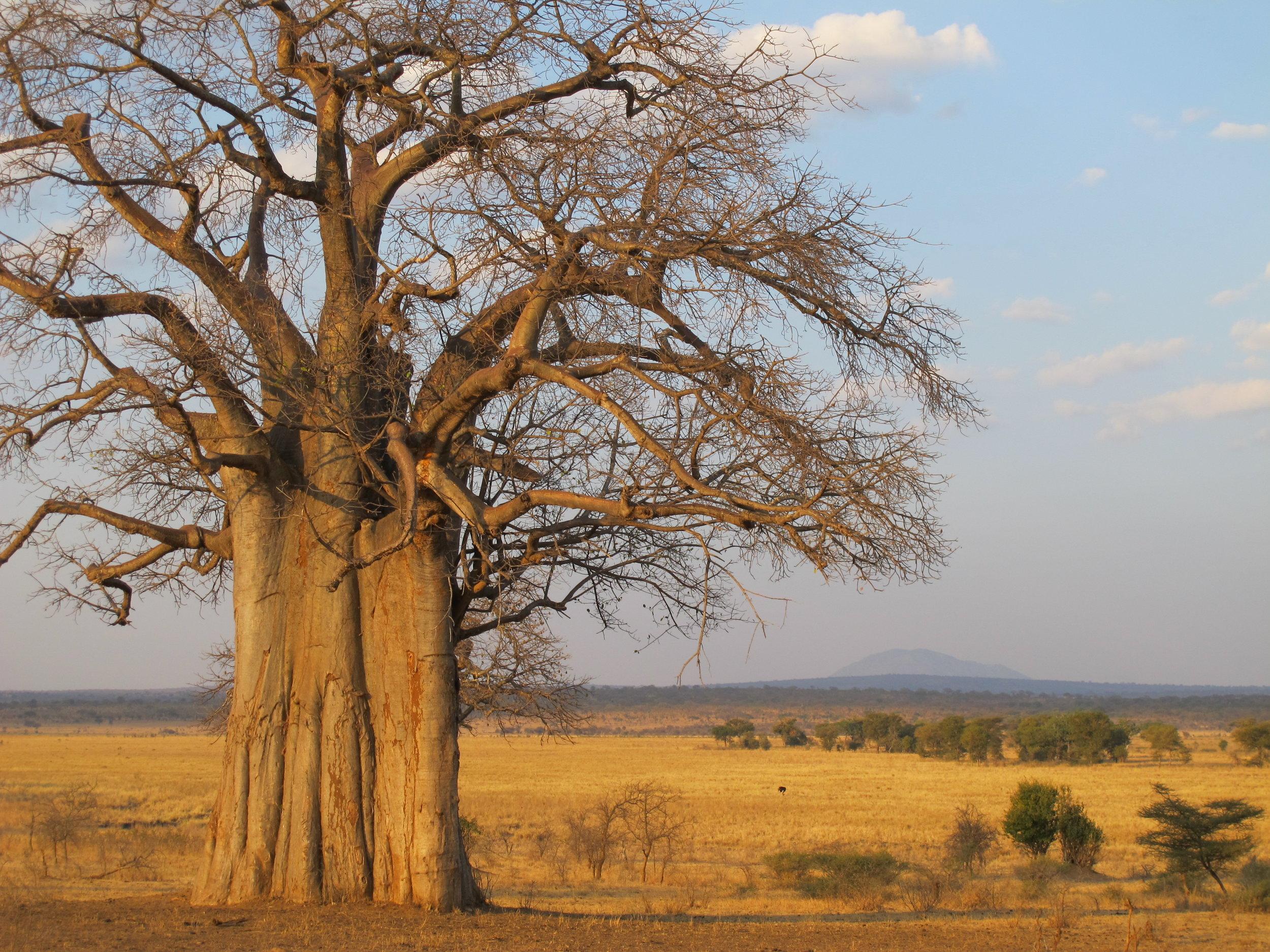 africa photo safari-tarangire-park8a.jpg