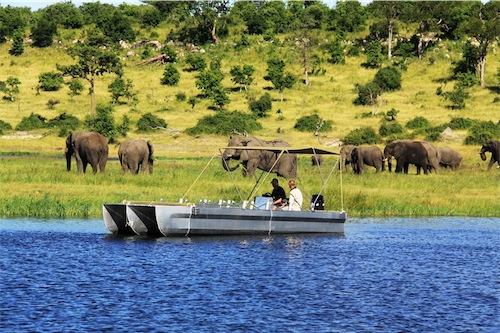 africa photo safari Chobe 4.jpg