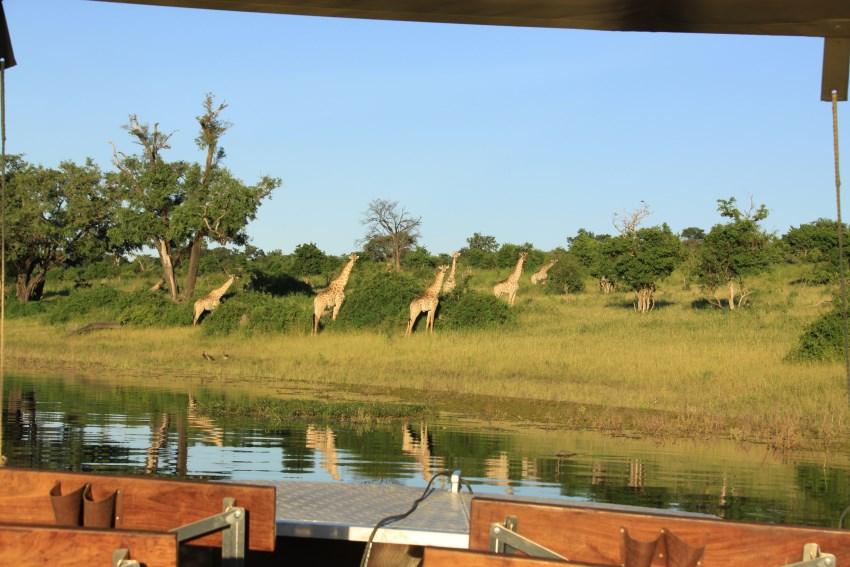 africa photo safari Chobe 11.jpg