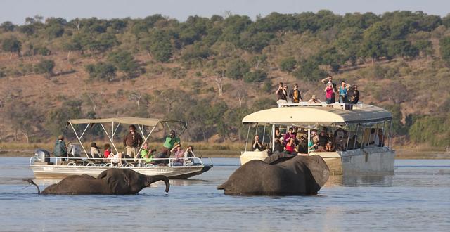africa photo safari Botswana8.jpg