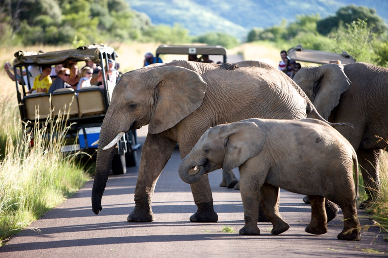 Day: 1,2,3,4,5: PILANESBERG NATURE RESREVE - Set in an extinct volcanic crater, with grasslands, wooded valleys and multihued rock formations. Wildlife includes elephants, lions, leopards and rhinos.Abundant birdlife includes eagles and ostriches.