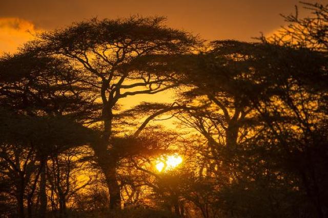 africa photo safari tanzania6.jpg