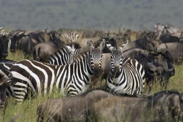 africa photo safari tanzania2.jpg