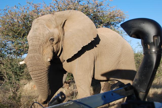 africa photo safari namibia-0547.JPG