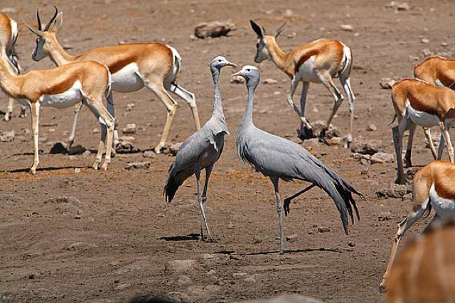 africa photo safari namibia-0546.jpg