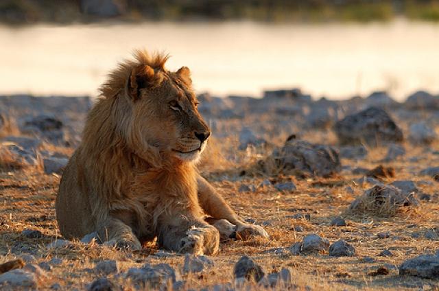 africa photo safari namibia-0544.jpg