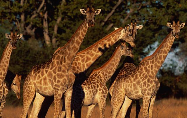 africa photo safari namibia-0543.jpg