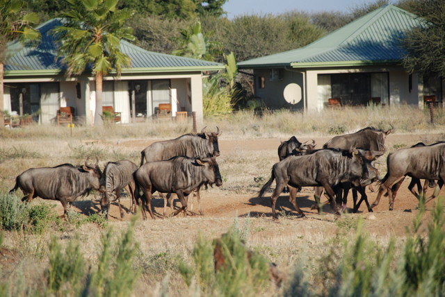 africa photo safari namibia-0542.JPG