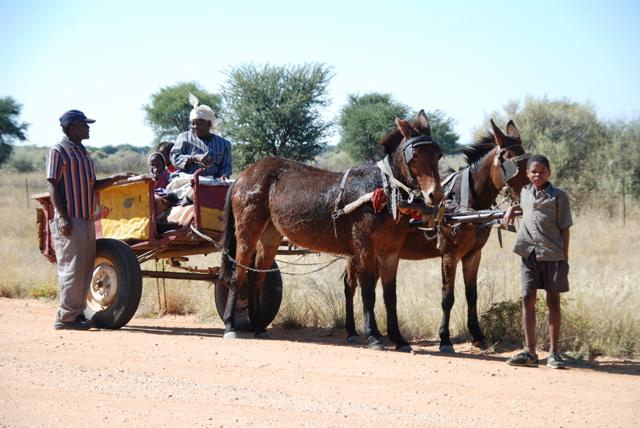 africa photo safari namibia-0541.JPG