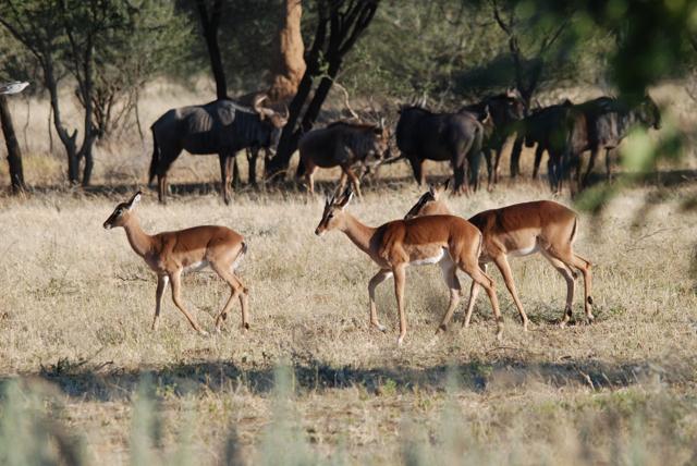 africa photo safari namibia-0540.JPG