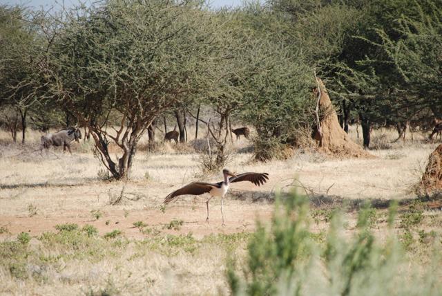 africa photo safari namibia-0537.JPG
