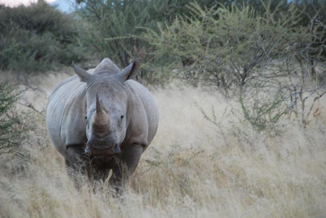 africa photo safari namibia-0536.JPG