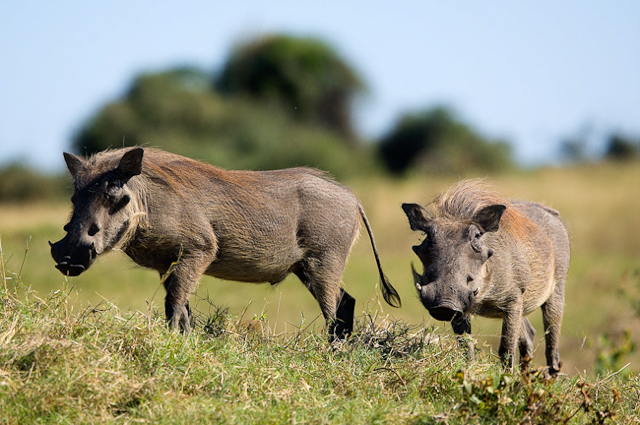 africa photo safari namibia-0535.jpg