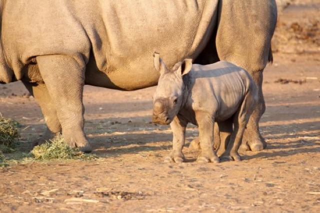 africa photo safari namibia-0533.jpg
