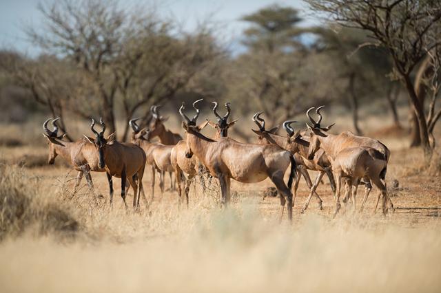 africa photo safari namibia-0532.jpg