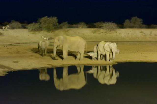 africa photo safari namibia-0530.jpg