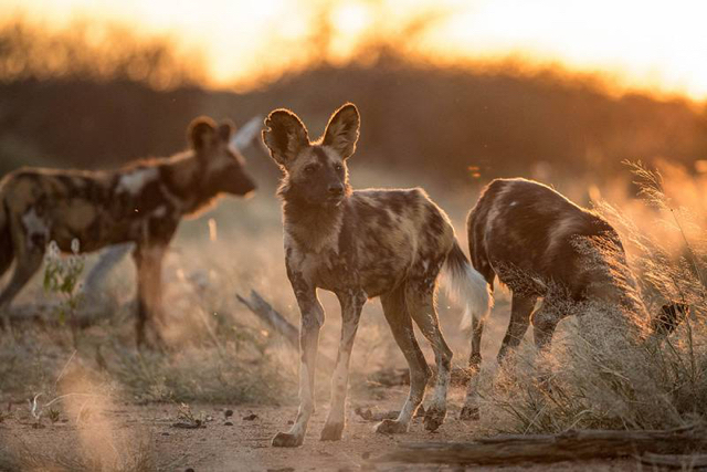 africa photo safari namibia-0531.jpg