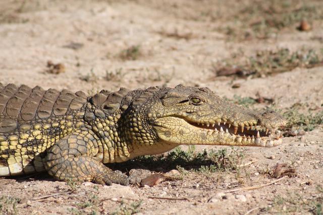 africa photo safari namibia-0524.jpg
