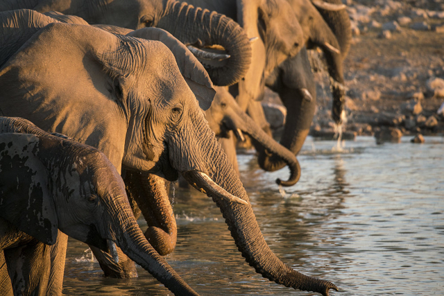 africa photo safari namibia-0522.jpg