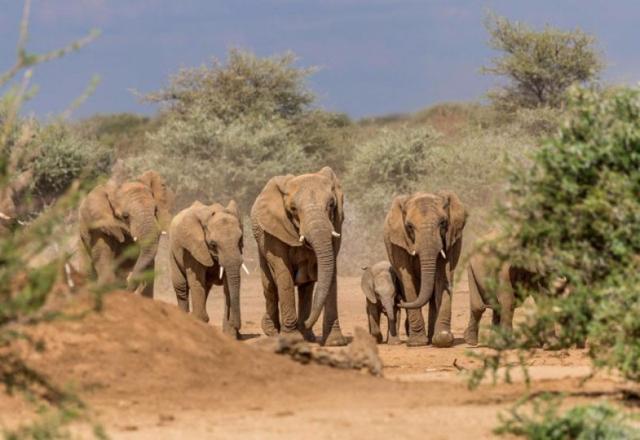 africa photo safari namibia-0521.jpg
