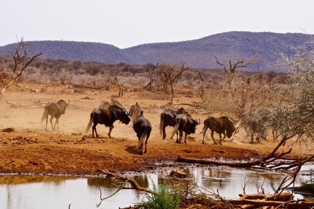 africa photo safari namibia-0520.jpg
