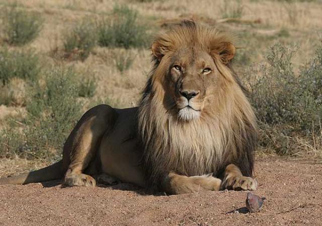 africa photo safari namibia-0519.jpg