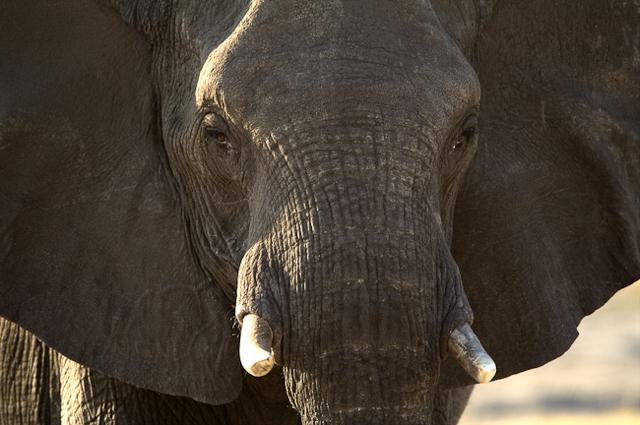 africa photo safari namibia-0518.jpg
