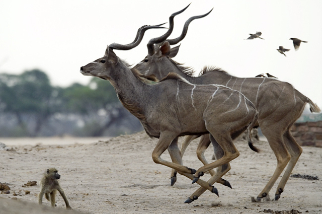 africa photo safari namibia-0515.jpg