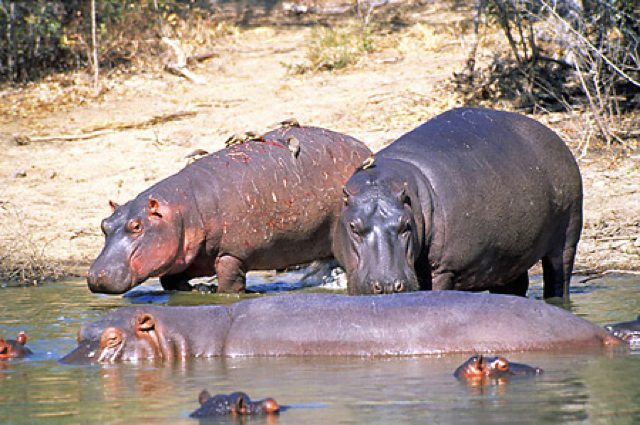 africa photo safari namibia-0514.jpg