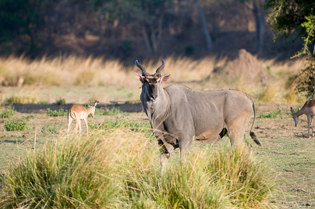 africa photo safari namibia-057.jpg