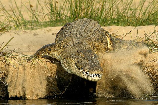 africa photo safari namibia-058.jpg