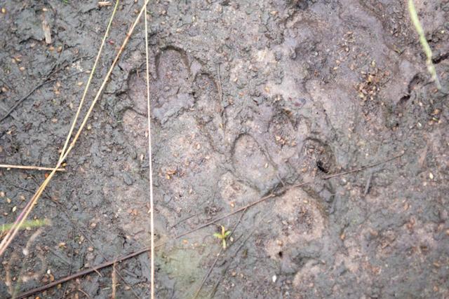 africa photo safari Zimbabwe-0118.jpg