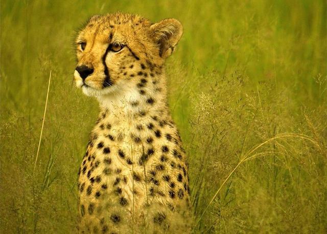 africa photo safari Zimbabwe-015.jpg