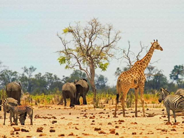 africa photo safari Zimbabwe-011.jpg
