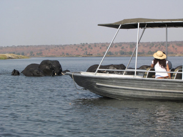 africa photo safari chobe-02D13.jpg
