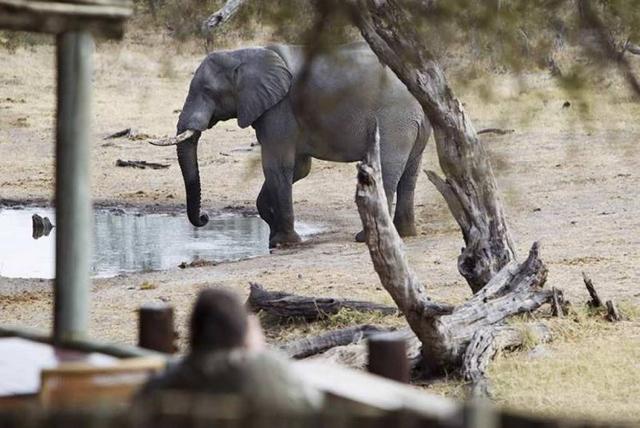 africa photo safari botswana-07G18.jpg