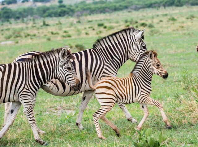 africa photo safari botswana-07G15.jpg