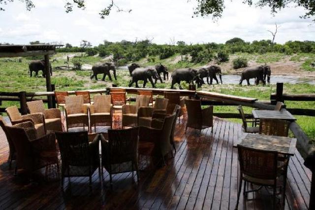 africa photo safari botswana-07G13.jpg