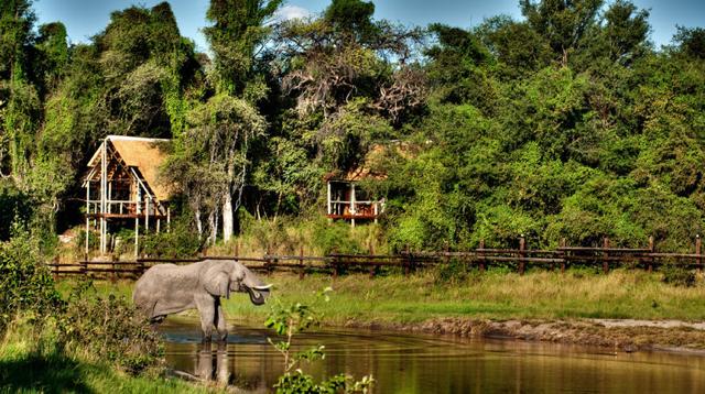 africa photo safari botswana-07G12.jpg