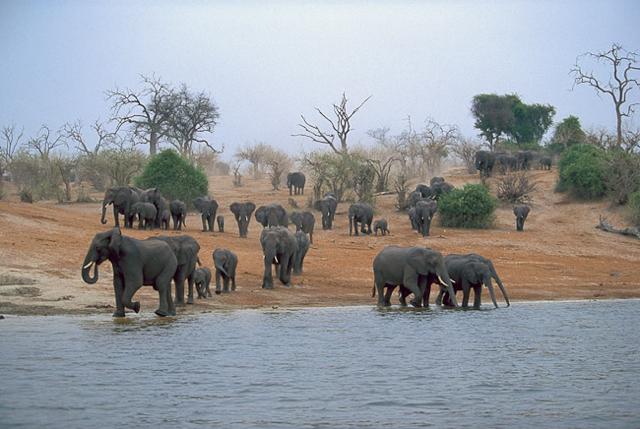 africa photo safari botswana-07G8.jpg